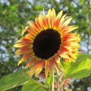 Naturopathic Medicine: The Healing Power of Nature